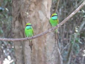 Isfugle i Wilpattu National Park