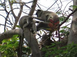 Flere aber