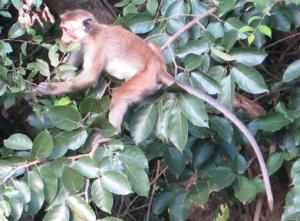 Monkey-tricks