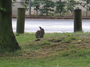 Hare i Marl - en New Town i Ruhr