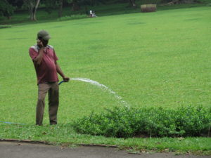 Garden watering in Botanical Garden in Kandy