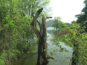 Natur ved Buduruwagala