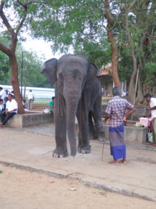 Climb under an elephant three times and be happy! Along the way from Ella to Yala