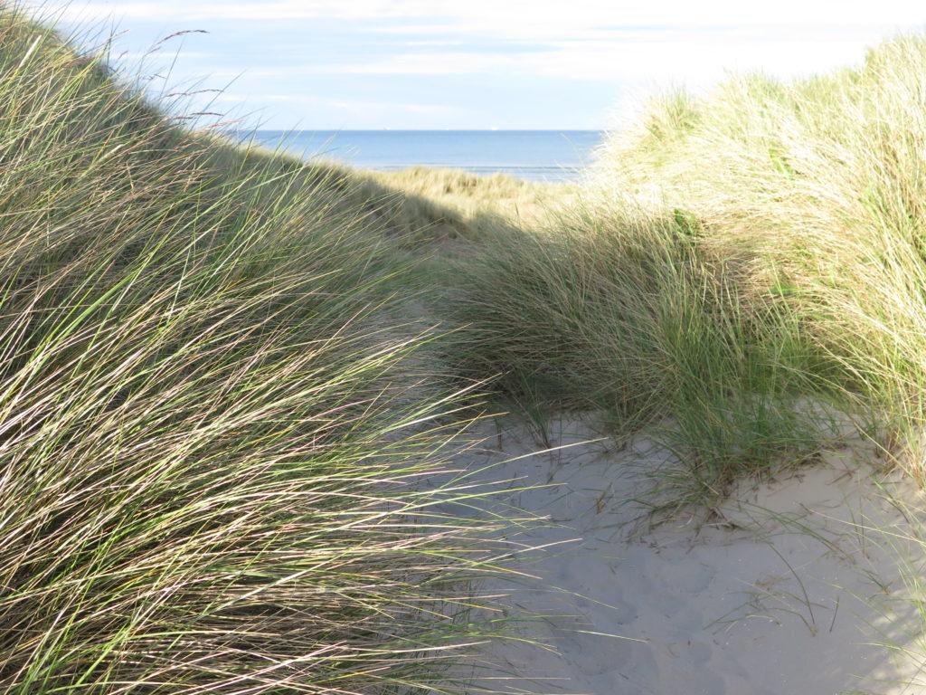 lit, hvor Marehalm holder igen på sandflugten
