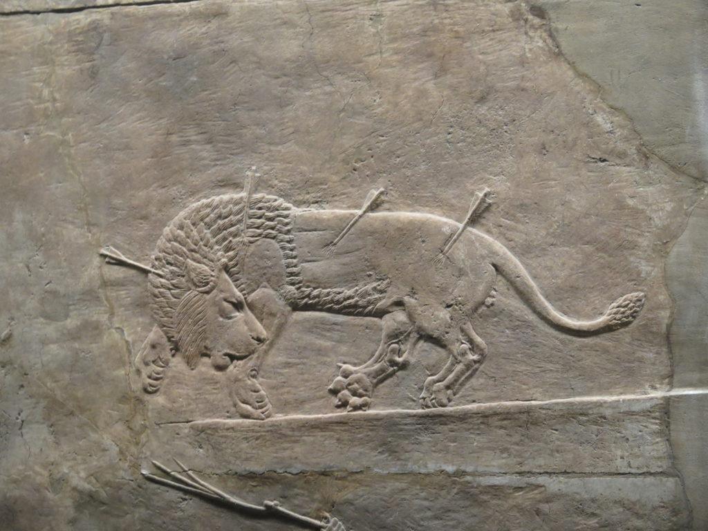 Nærbillede af løvejagt