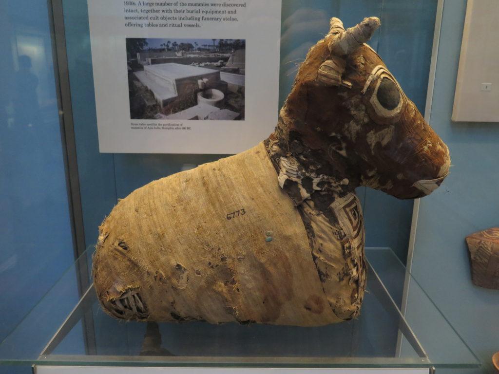 Ægyptisk mumie af en tyr