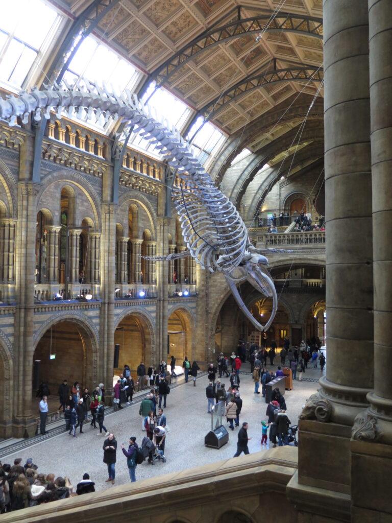 Forhallen på Natural History Museum