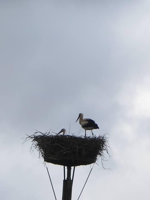 De to storke i Smedager i reden