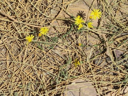 Blomster i ørkenen