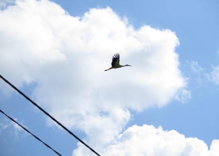 Flyvende stork