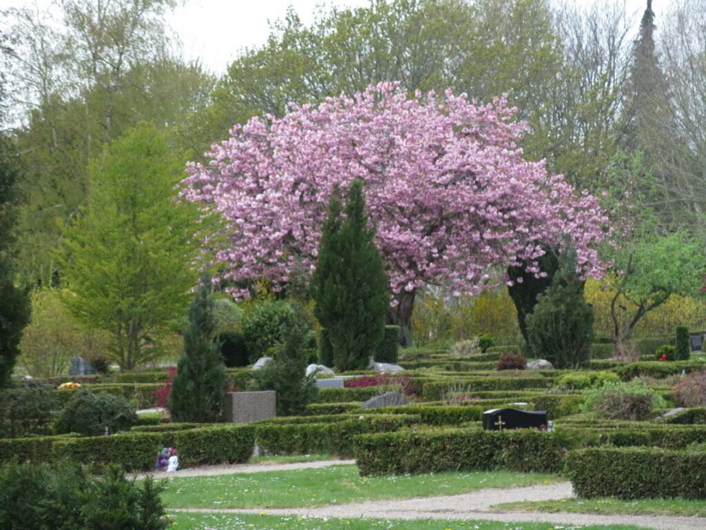 Træ, der blomstrer