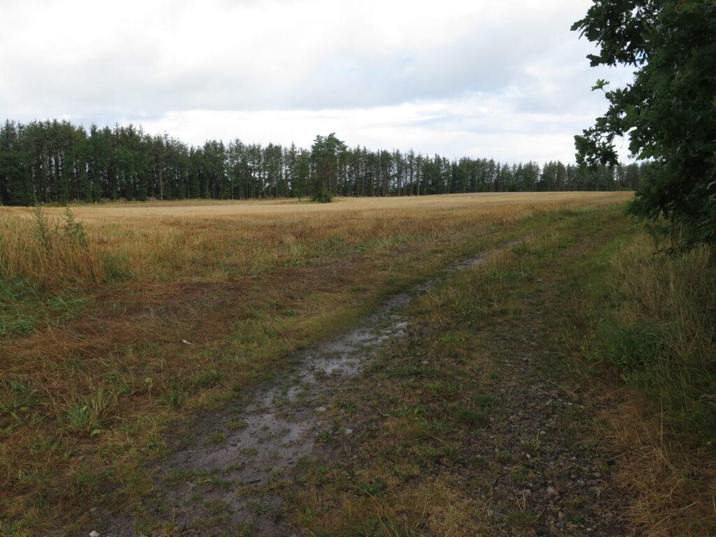 Marken ved siden af mindestenen. Engelsk bombefly styrtede i Sønderjylland